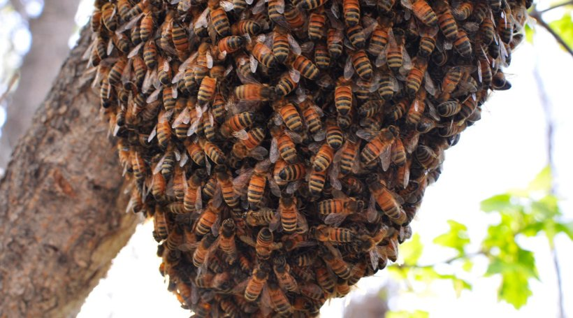 bees-for-hive-swarm_1400x.progressive